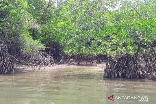 Pemkab Nunukan siapkan 350 hektar untuk kawasan mangrove