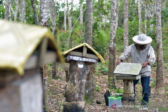 Mencegah karhutla, madu langka mereka dapat (bagian 2)