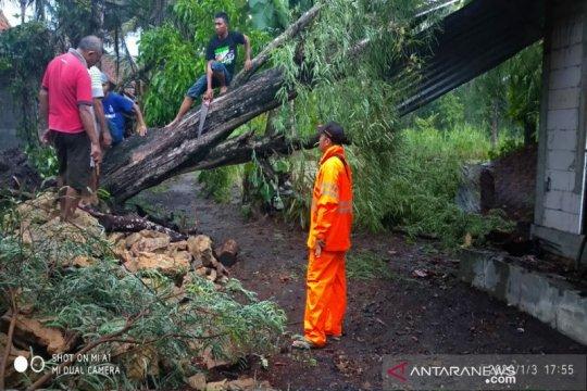 40 pohon tumbang sebabkan rumah rusak di Kulonprogo, sebut BPBD