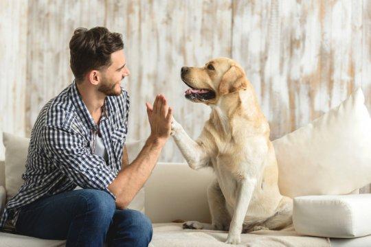 Anjing bisa kena virus corona, tapi bukan COVID-19
