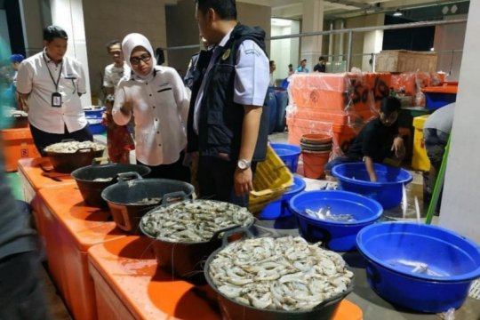 Perum Perindo sebut perdagangan ikan tidak terganggu wabah corona