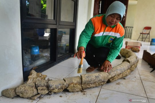 Penemuan fosil gading gajah purba