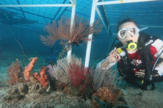 Kondisi terumbu karang Indonesia disebut mengkhawatirkan, ini sebabnya