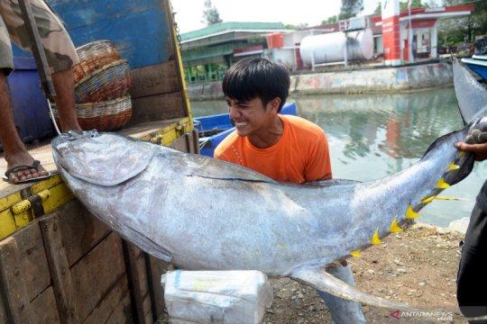KKP: Ekspor perikanan justru naik di tengah wabah Corona, ini sebabnya