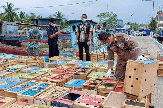 BC Aceh gagalkan penyelundupan unggas asal Thailand senilai Rp8 miliar