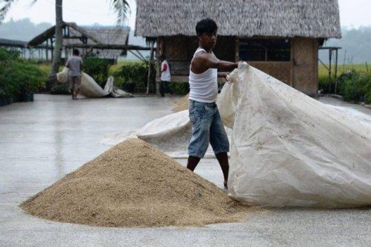 Kementan prediksi produksi beras puncak panen capai 5,03 juta ton