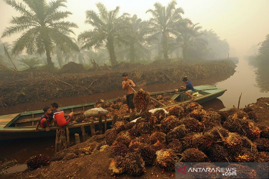 Harga sawit Riau naik lagi dampak pandemi COVID-19