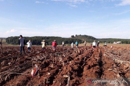 Balitbangtan kawal percepatan tanam jagung di Kalimantan Selatan