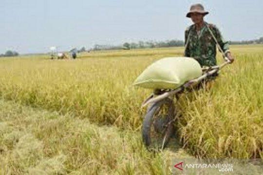Mentan upayakan penggilingan padi dapat KUR, guna serap gabah petani