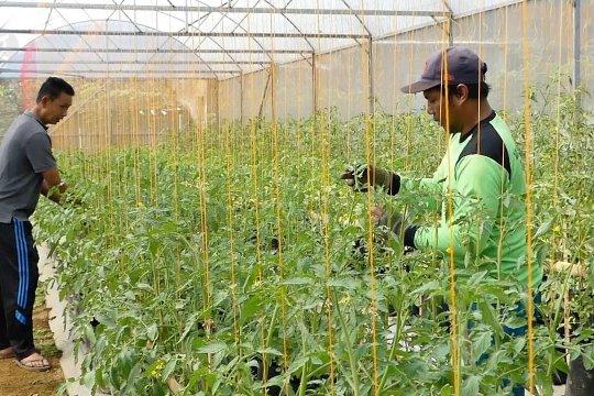 HKTI ingin kolaborasi teknologi pertanian se-Asia