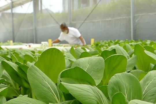 Hidup sehat dengan sayuran organik