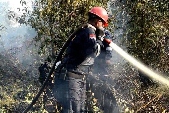 967 Ha hutan dan lahan di Riau ludes terbakar