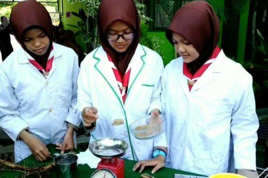 Siswi MTSN 1 Kotawaringan Timur teliti khasiat akar kayu Laban