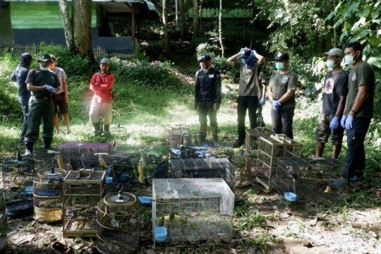 56 burung dilepasliarkan di Taman Nasional Bukit Barisan Selatan