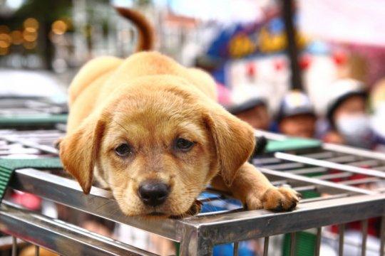 Corona, Shenzhen larang warga makan daging kucing & anjing
