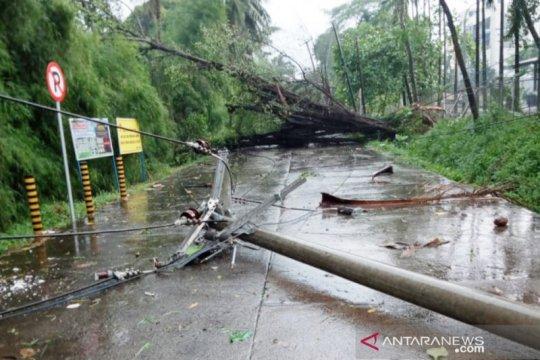Puting beliung tumbangkan sejumlah pohon di Citeureup Bogor