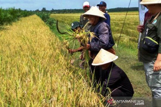 Indef sebut pertanian jadi stabilitator pemulihan ekonomi saat pandemi