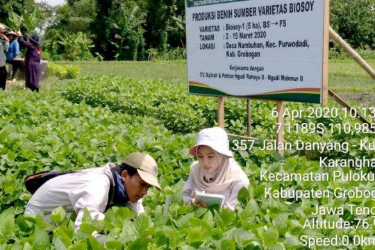 Balitbangtan Kementan perbanyak benih kedelai biosoy di lima provinsi