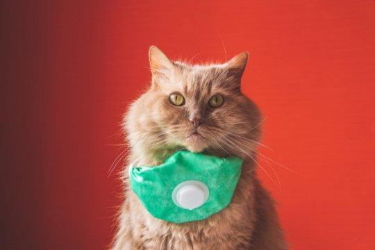 Studi baru, kucing bisa terinfeksi virus corona