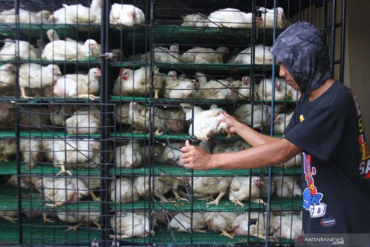 Harga daging ayam turun, Kota Malang deflasi 0,12 persen pada April