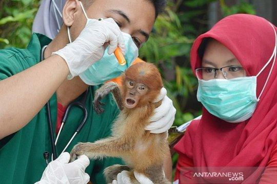 SBI berjuang selamatkan bekantan dari pandemi COVID-19