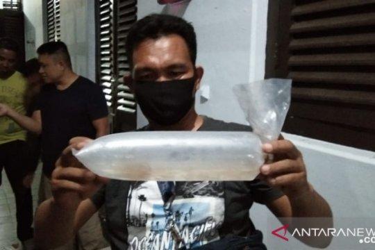 Polisi dan BKIPM Jambi lepasliarkan 30.000 benih lobster