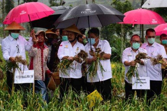 Menteri Pertanian panen bawang putih di Temanggung