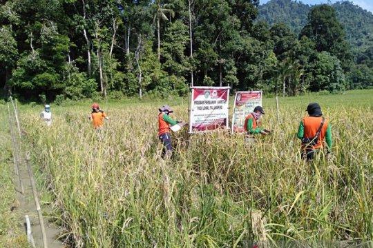 Pemkab Landak-Batan perbaiki kualitas padi lokal