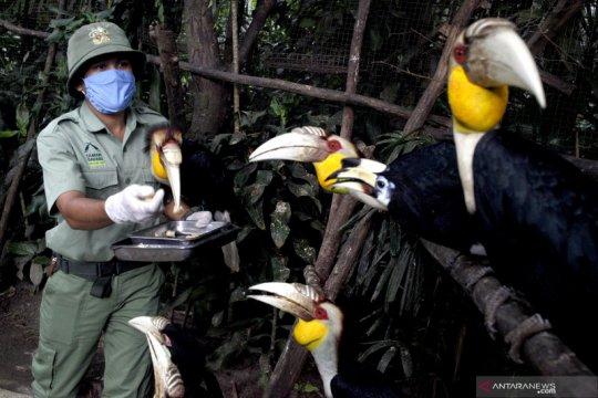 Perawatan satwa di Royal Safari Garden