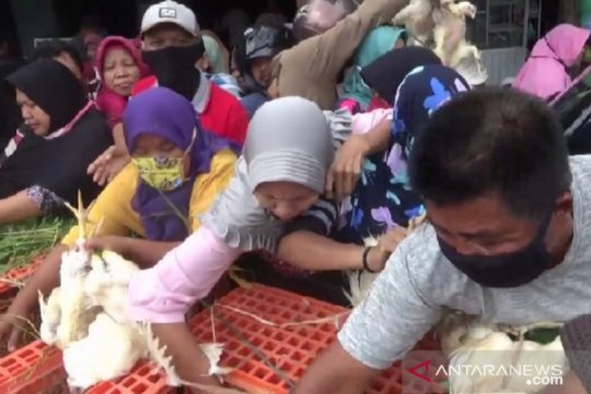 Peternak Madiun bagikan ribuan ayam gratis ke warga