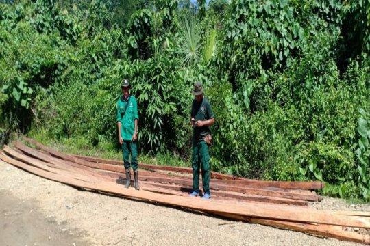 """BKSDA Sultra temukan puluhan batang kayu hasil """"illegal logging"""""""