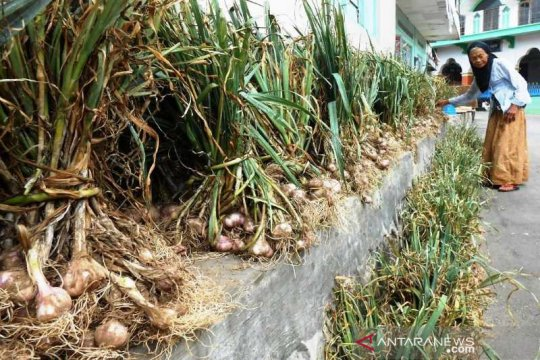 Importir diminta beli bawang putih petani Temanggung
