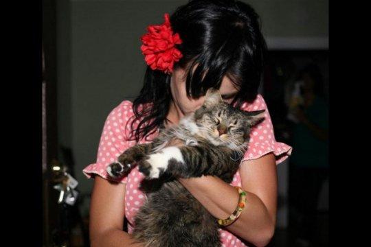 Kucing kesayangan Katy Perry mati