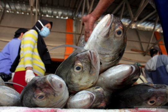 KKP-Kementerian BUMN konsepkan penyerapan tangkapan hasil nelayan