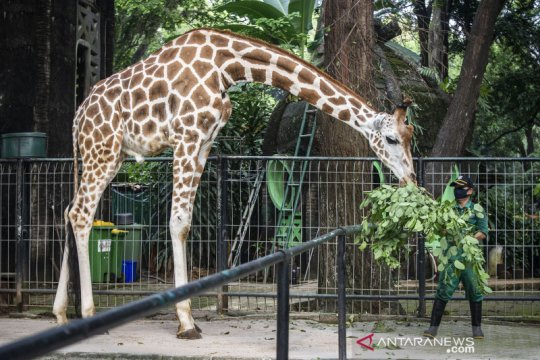 Bamsoet ajak masyarakat jadi orang tua asuh bagi hewan kebun binatang