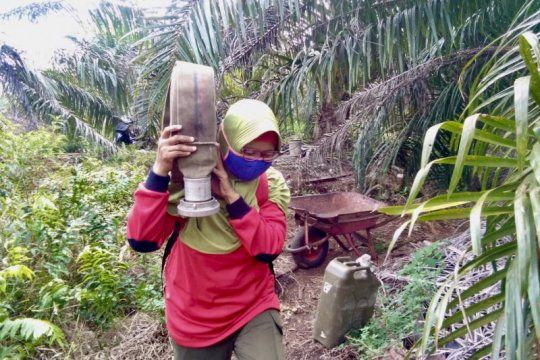 Cegah COVID-19 di daerah rawan karhutla, Gubes UI: Gunakan masker N95