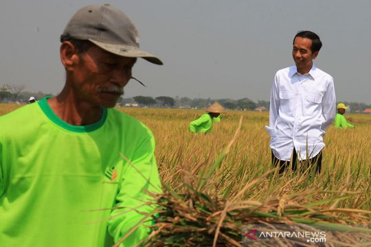 Presiden minta K/L jalankan strategi terintegrasi bangun ekonomi desa