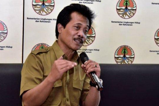 Indonesia 2018-2019 kehilangan tutupan hutan 462.400 ha