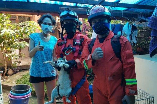 Petugas Damkar evakuasi kucing tercebur dalam sumur