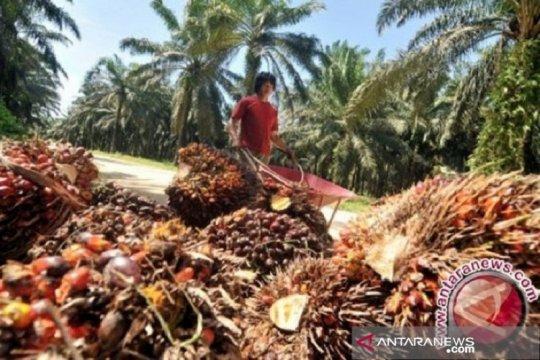 Konsumsi minyak sawit dalam negeri tumbuh 7,2 persen kuartal I