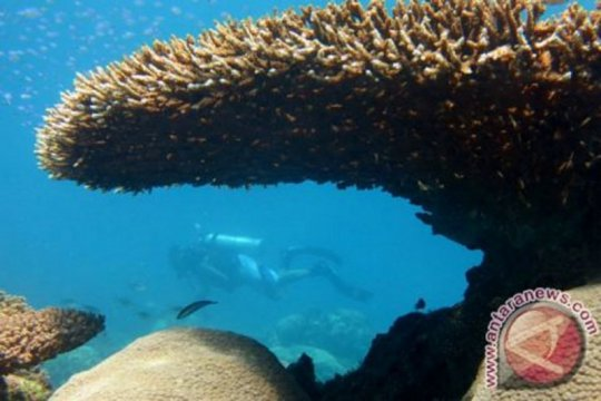 LIPI:perbanyak kawasan konservasi laut dukung pemulihan terumbu karang