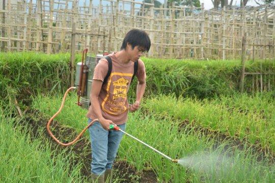 Balitbangtan rekomendasikan pengendalian hama terpadu bawang merah
