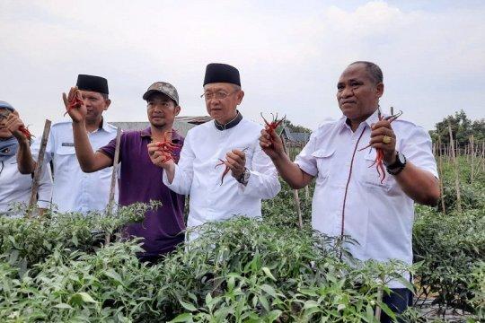 Kelompok tani Jambi panen cabai merah bantu jaga pasokan