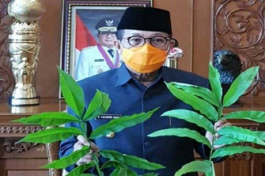 "Gubernur Jambi tindaklanjuti khasiat daun ""Sungkai"" obati COVID-19"