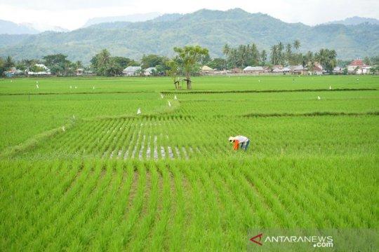 Kemendes PDTT fokus ke 10 daerah transmigrasi untuk intensifikasi padi