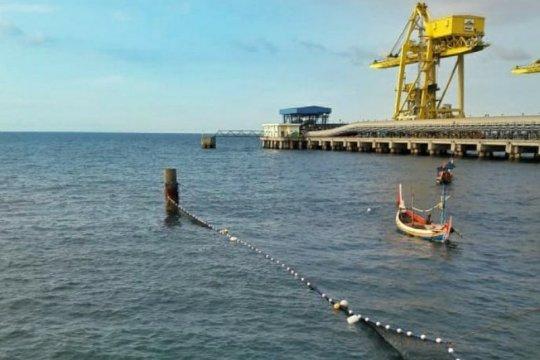 Ribuan ubur-ubur mendekat ke Pembangkit listrik Paiton Probolinggo