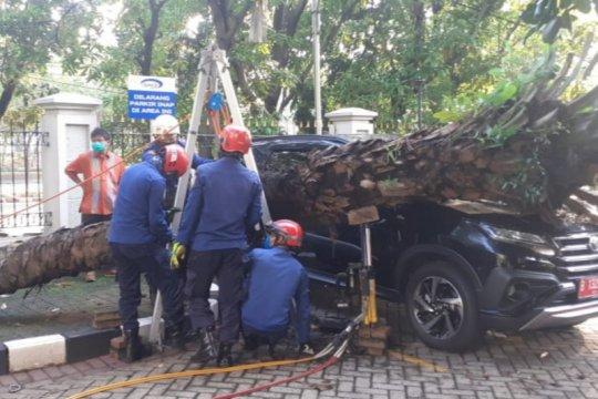 Satu unit minibus penyok tertimpa pohon kelapa sawit di Jaktim