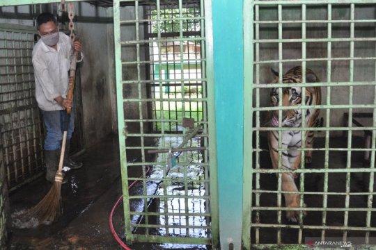 Pandemi COVID-19, ratusan hewan di Medan Zoo terancam kelaparan