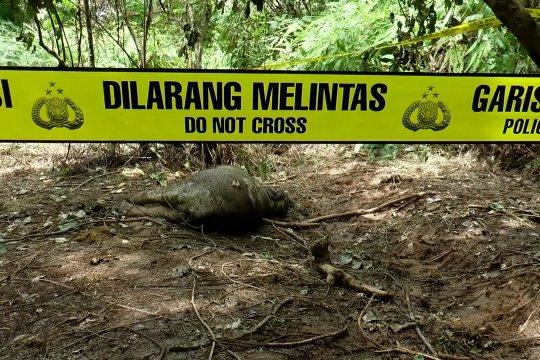 Lagi, gajah Sumatera ditemukan mati di Aceh