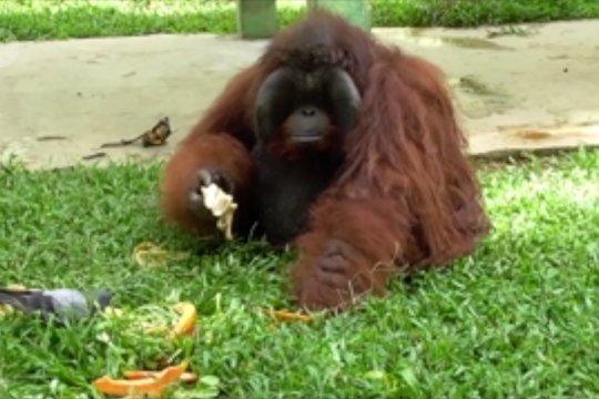 Ratusan hewan di Medan Zoo terancam kelaparan